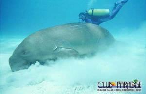 underwater02