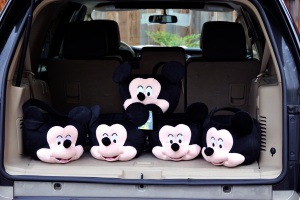 Mickey Mouses are looking for new homes!